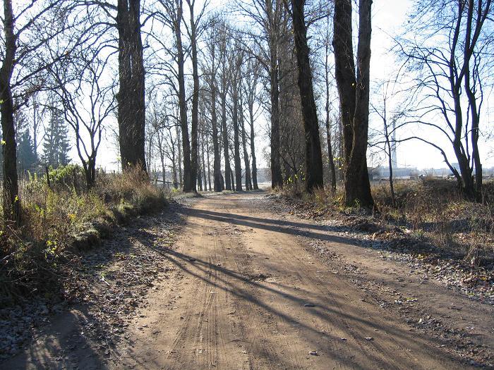 Väg som gick igenom lägret. Träden planterades av fångar i lägret