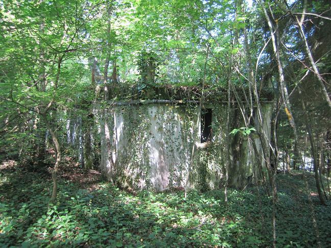 Huset ligger bland tät vegetation